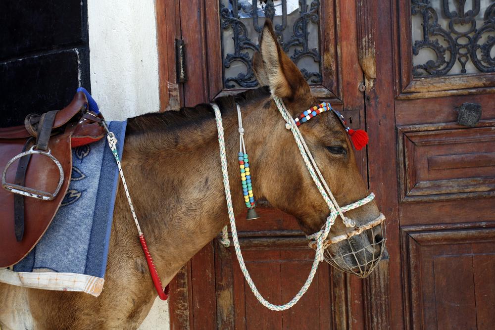Folktale Donkeys